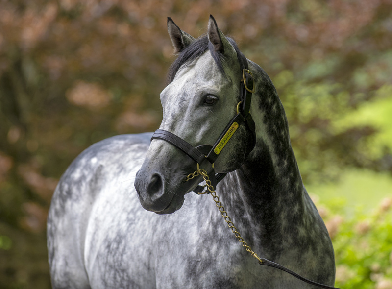 Her World third stakes winner for Caravaggio